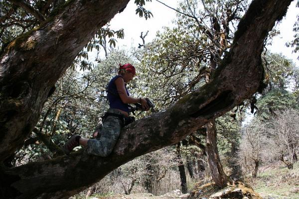 В рододендроновом лесу
